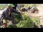 المغرب اليوم  - شاهد تجارة الخضروات على الطريق