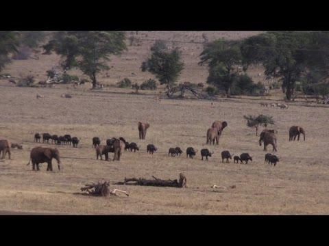 المغرب اليوم  - مزارع يكافح لحماية الحيوانات من النفوق عطشًا في كينيا
