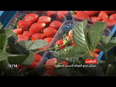 المغرب اليوم  - قطاع إنتاج الفواكه والخضر المغربية والانفتاح على السوق الأفريقية