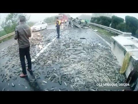 المغرب اليوم  - طن ونصف من الأسماك الحية على الأسفلت في الصين