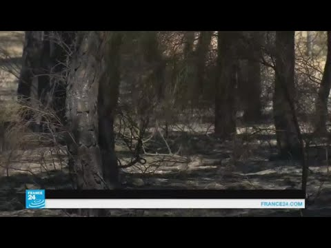 المغرب اليوم  - شاهد  السيطرة على حرائق الغابات في جنوب إسبانيا