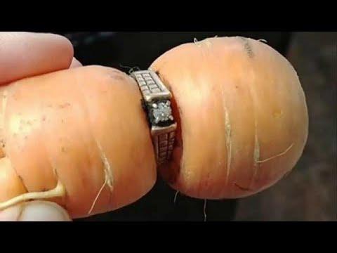 المغرب اليوم  - شاهد سيدة تعثر على خاتمها الماسي في ثمرة جزر