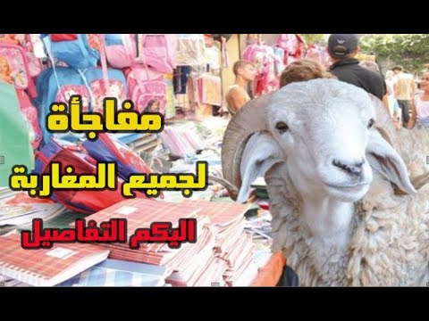 المغرب اليوم  - بالفيديو  ارتفاع كبير لأسعار الأضاحي في المغرب