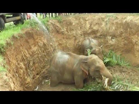 المغرب اليوم  - شاهد إنقاذ 4 أفيال صغيرة سقطت في حفرة