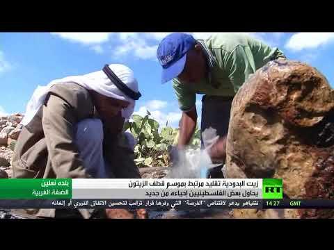 المغرب اليوم - شاهد زيت البدودية تقليد مرتبط بقطاف الزيتون