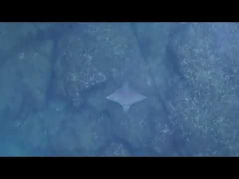 بالفيديو طائرة دون طيار ترصد لحظة هروب سمكة من قرش
