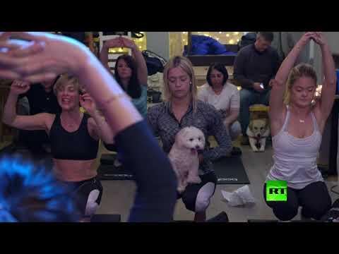 شاهد اليوغا مع كلاب  اختراع جديد يثير الجدل