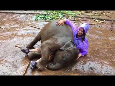 شاهد فيل صغير يلهو مع سائحة في تايلاند