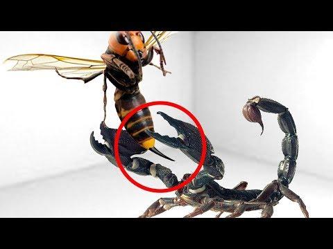 شاهد أقوى 5 معارك طاحنة بين حشرات تم تصويرها على كاميرا