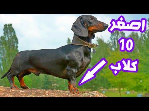 شاهدأصغر وأغرب 10 كلاب في العالم