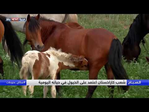 تعرف على سر ارتباط شعب كازاخستان بالخيول