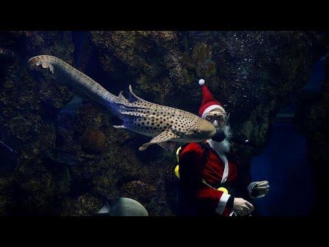 شاهد زيارة لسانتا كلوز داخل حوض للأسماك في متحف مالطا الوطني