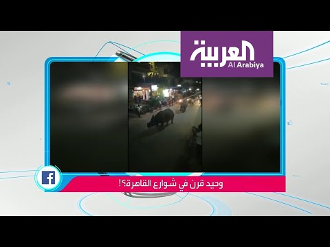 شاهد حقيقة فيديو صادم لوحيد القرن يتجول في القاهرة