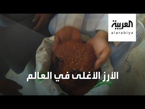 شاهد كيف يتم زراعة الأرز الحساوى الأحمر