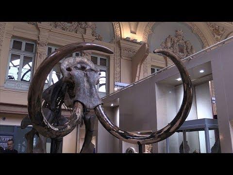a mammoth skeleton displayed