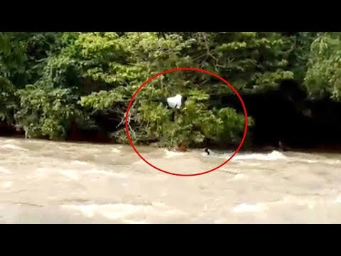 man falls into raging river in failed attempt