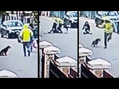 real life bolt hero stray dog saves woman