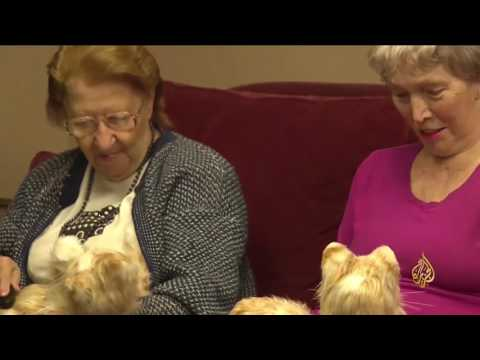 المغرب اليوم  - شاهد ابتكار قطط إلكترونية مؤنسة للمسنين