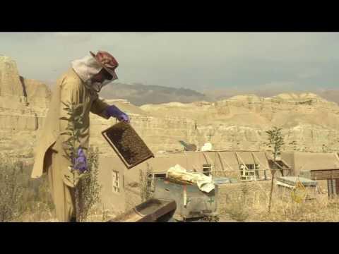 المغرب اليوم  - شاهد المرأة الأفغانية وشهد العسل يزيل مرار الأيام