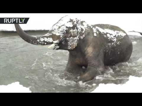 المغرب اليوم  - بالفيديو حيوانات أوريغون يلهون في الجليد