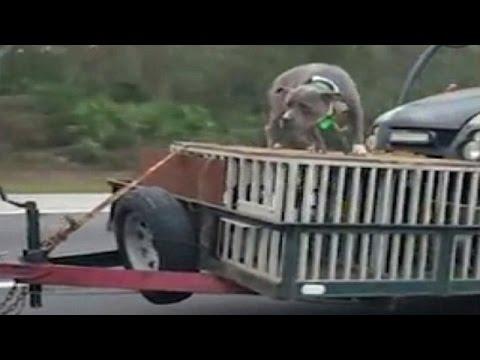 المغرب اليوم  - رجل يعرض كلبه للخطر أعلى السيارة