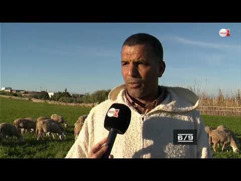 المغرب اليوم  - شاهد  الاعتماد على الزراعة الكلئية والاستغناء عن العلف الاصطناعي