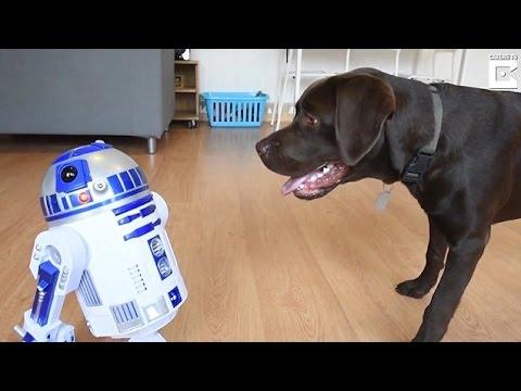 المغرب اليوم  - شاهد رد فعل كلب عندما رأى روبوت لأول مرة