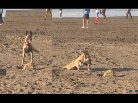 المغرب اليوم  - شاهد كيفية ترويض الكلاب بأقل مجهود