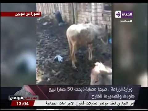 المغرب اليوم  - شاهد توقيف عصابة ذبحت 50حمارًا