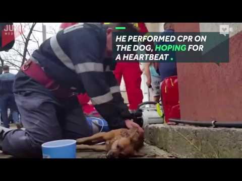 المغرب اليوم  - رجل إطفاء يعطى قبلة الحياة لكلب يحتضر