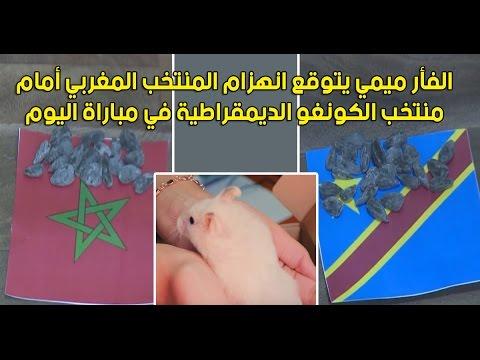 المغرب اليوم  - الفأر ميمي يتوقع انهزام المنتخب المغربي أمام الكونغو