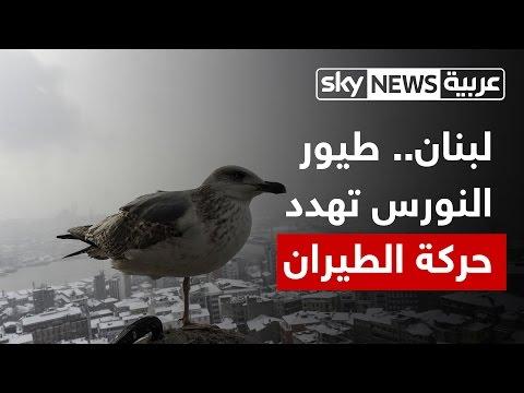 المغرب اليوم  - شاهد طيور النورس تهدد سلامة الطيران المدني