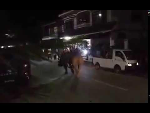 المغرب اليوم  - شاهد وحيد قرن يتجوّل في أحد الشوارع في قرية صغيرة