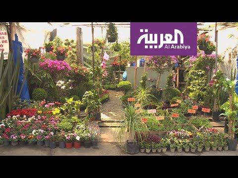 المغرب اليوم  - شاهد جولة في سوق الزهور تشوميلكو في المكسيك