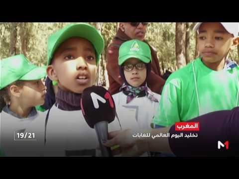 المغرب اليوم  - نشاط بيئي بغابة بوسكورة تخليدا لليوم العالمي للغابات