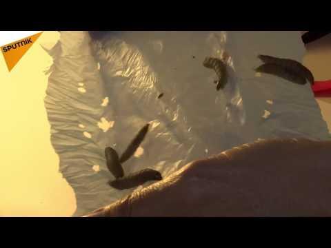 المغرب اليوم  - بالفيديو ديدان قادرة على التهام المواد البلاستيكية