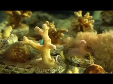 المغرب اليوم  - الشعاب المرجانية في الأردن تتكيف مع الاحتباس الحراري