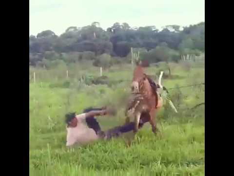 المغرب اليوم  - بالفيديو حصان مذهل ينتقم من رجل أثار غضبه