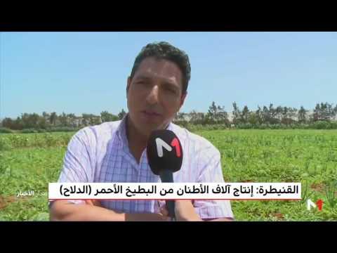 المغرب اليوم  - شاهد إنتاج آلاف الأطنان من البطيخ الأحمر في القنيطرة