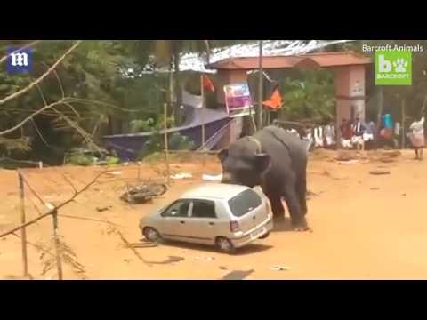 المغرب اليوم  - شاهد فيل غاضب يحطم سيارة داخل مهرجان هندي