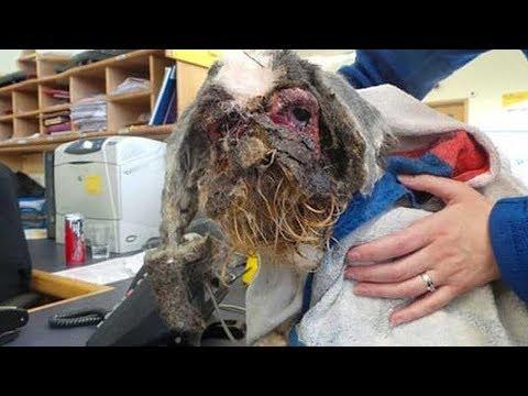 المغرب اليوم  - شاهد كلب هجروه في قبو لمدة 5 سنوات