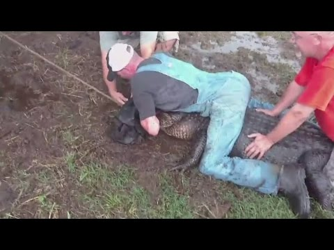 المغرب اليوم  - شاهد لحظات مرعبة لصيد تمساح ضخم في تكساس