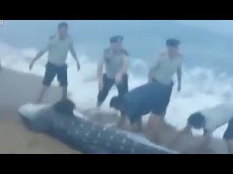 المغرب اليوم  - شاهد لحظة إنقاذ سمكة قرش وإعادتها إلى المياه