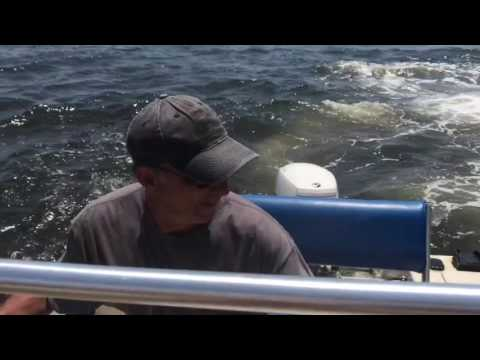 المغرب اليوم  - شاهد حوت ضخم كاد أن يلتهم قاربًا خلال مطاردة سمكة صغيرة