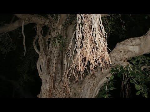 المغرب اليوم  - شاهد شجرة تعود للحياة من جديد وتعاقب قاطعيها