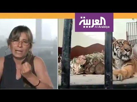 المغرب اليوم  - شاهد ناشطون يطالبون بتحسين أحوال حديقة الجيزة
