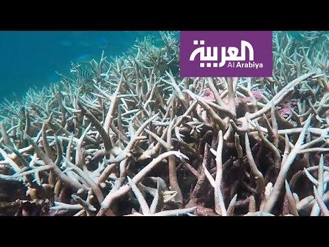 المغرب اليوم  - خبراء يقدرون قيمة الحاجز المرجاني في أستراليا بعشرات المليارات