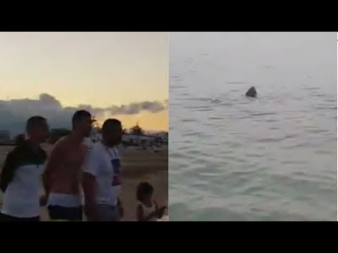 المغرب اليوم  - شاهد رعب وذعر المواطنين لحظة خروج أسماك القرش