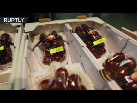 المغرب اليوم  - بالفيديو انطلاق مزاد أغلى عنب في العالم في اليابان