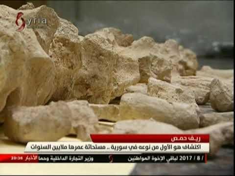 المغرب اليوم  - شاهد العثور على مستحاثة البليزوصور يفوق عمرها الـ 60 مليون عام